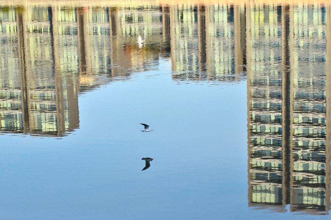 Image: Reflective by Jeffrey Mundell